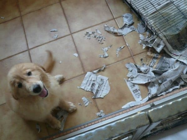 Dog Eating Paper