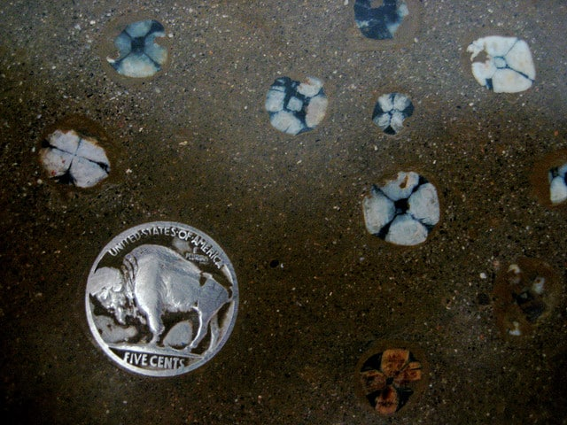 Buffalo Nickel on a Counter